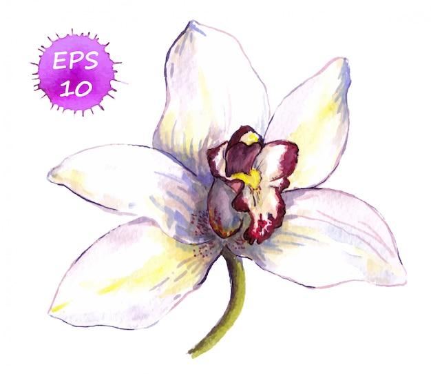 Uma flor isolada de orquídea branca
