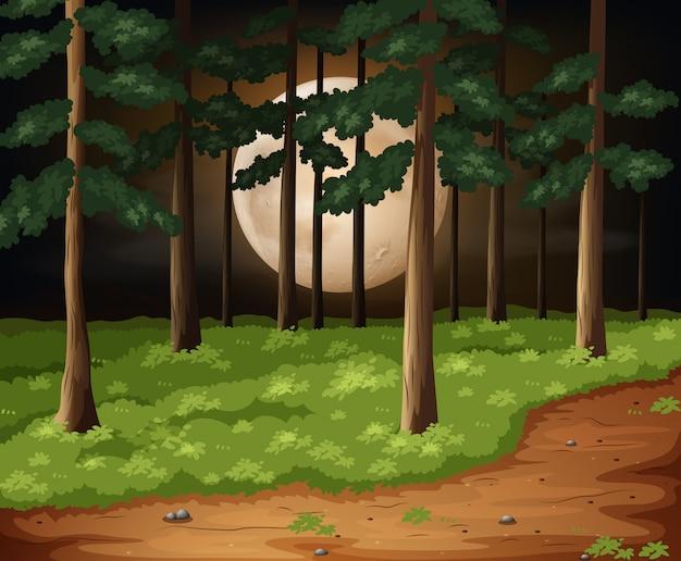Uma floresta na noite escura