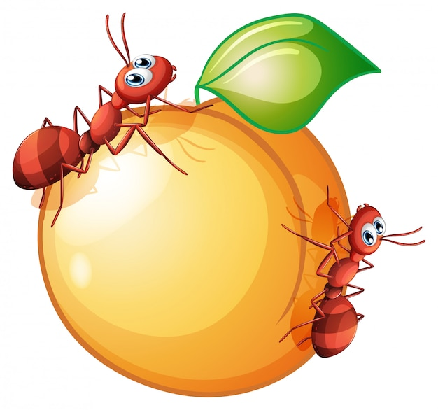 Uma fruta com duas formigas