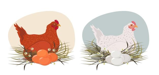 Uma galinha branca e uma galinha vermelha com ovos em um ninho de feno. um conjunto de vetores.