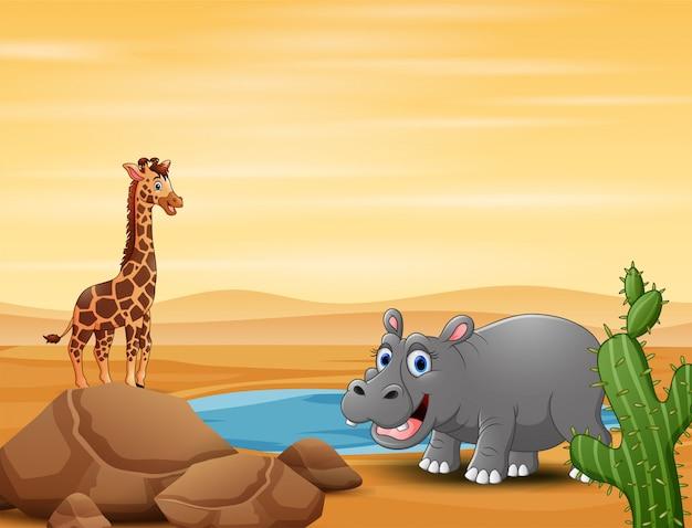 Uma girafa e hipopótamo no pequeno lago