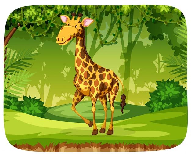 Uma girafa na floresta