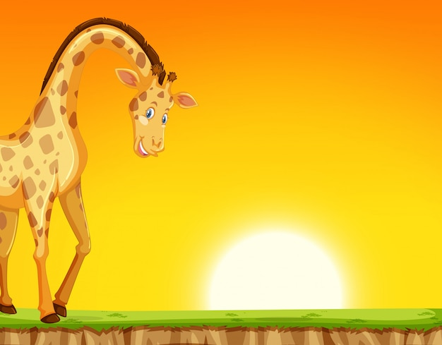 Uma girafa no fundo por do sol
