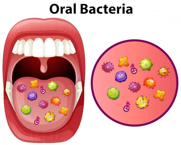 Uma imagem mostrando bactérias orais