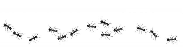 Uma linha de formigas operárias marchando em busca de comida