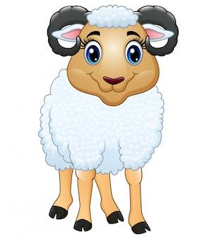 Uma ovelha bonita isolada no branco