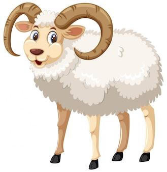 Uma ovelha de chifre macho whie em fundo branco