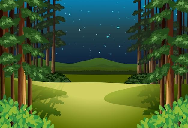 Uma paisagem de floresta à noite