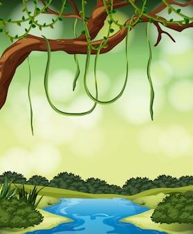 Uma paisagem de selva natural