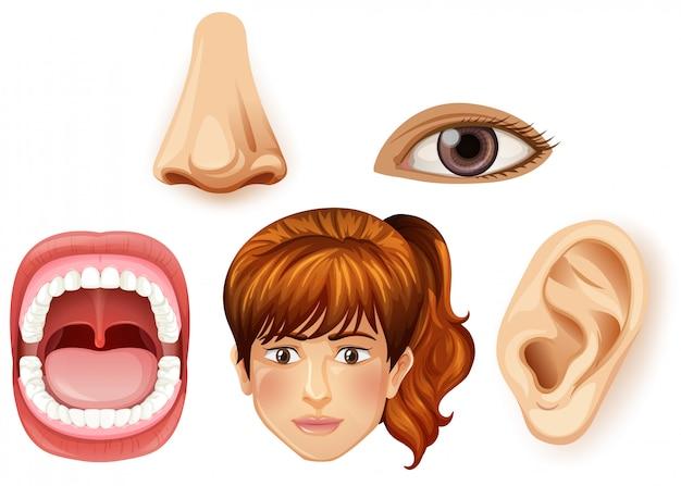 Uma parte facial feminina humana