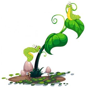 Uma planta com lagartas