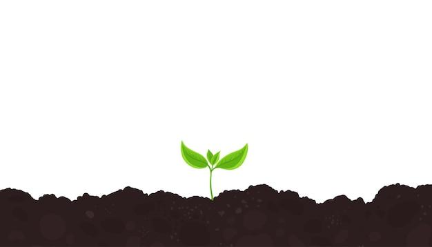 Uma planta jovem atira. germinação de mudas.