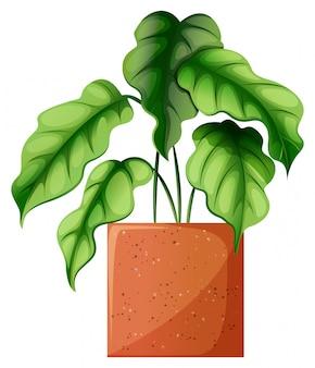 Uma planta ornamental verde frondosa