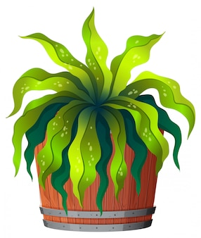 Uma planta verde em pote