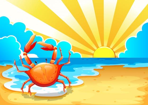 Uma praia com um caranguejo