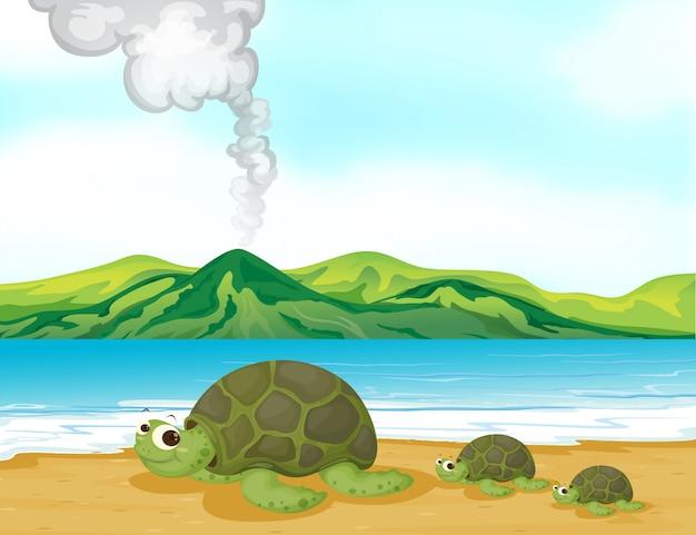 Uma praia vulcânica e tartarugas