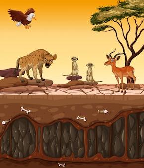 Uma terra seca e animais selvagens