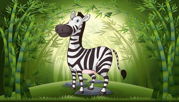 Uma zebra na floresta de bambu