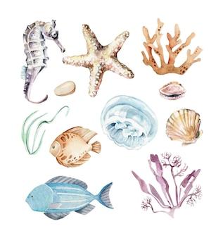 Underwater setsealife