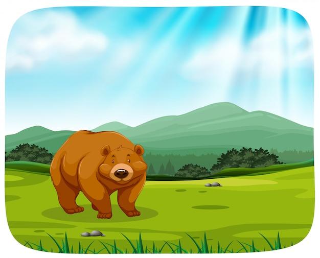 Urso bonito na natureza