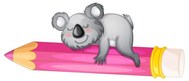 Urso dormindo no lápis