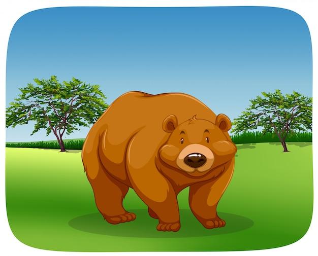 Urso em um campo
