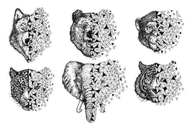 Urso lobo, macaco, tigre e mão de elefante desenhando e desenhando em preto e branco