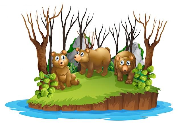 Urso na ilha isolada