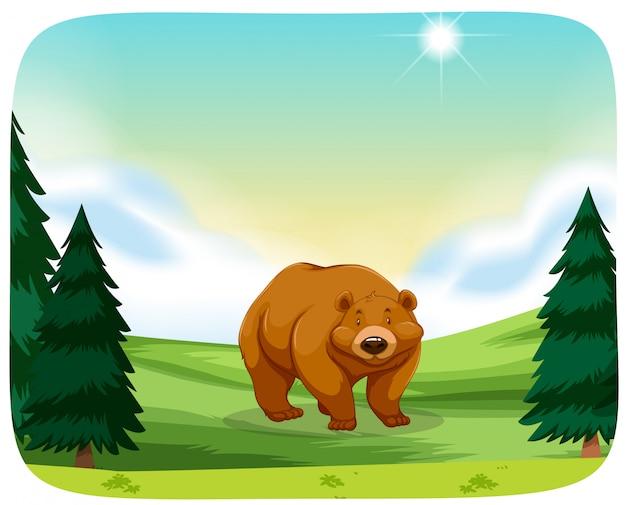 Urso pardo na cena da natureza