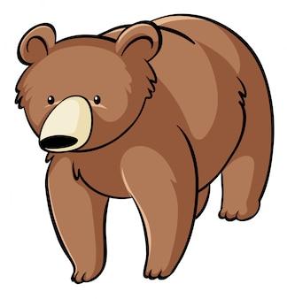 Urso pardo no fundo branco