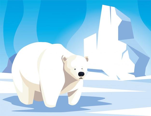 Urso polar no pólo norte, paisagem do ártico