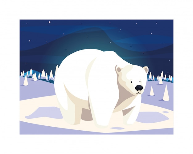 Urso polar no pólo norte