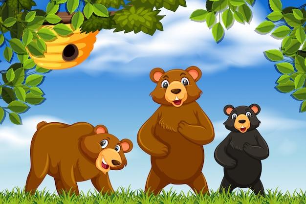 Ursos bonitos na cena da natureza