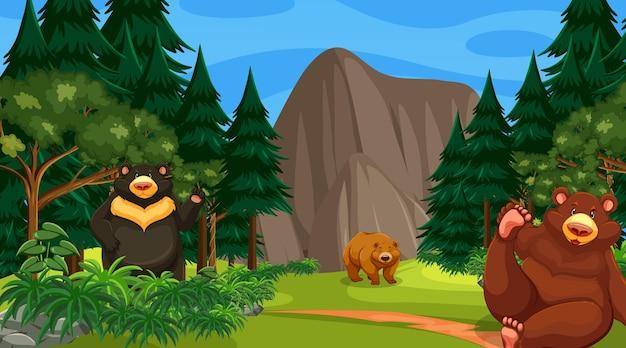 Ursos diferentes em cena de floresta ou floresta tropical com muitas árvores