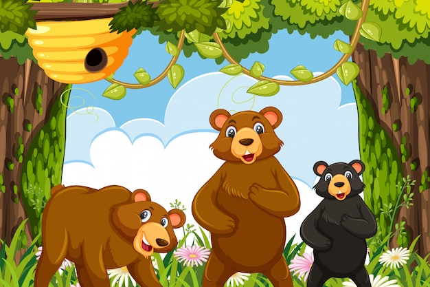 Ursos na cena da selva