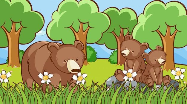 Ursos pardos na floresta