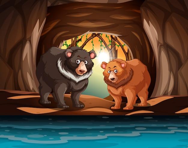 Ursos pardos que vivem na caverna