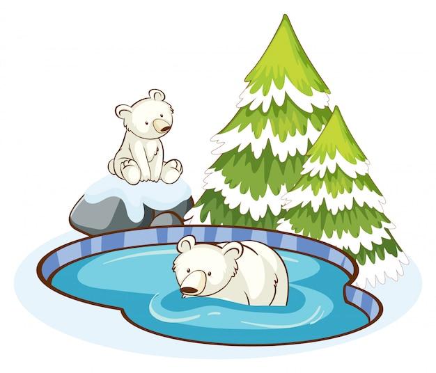 Ursos polares na montanha de neve