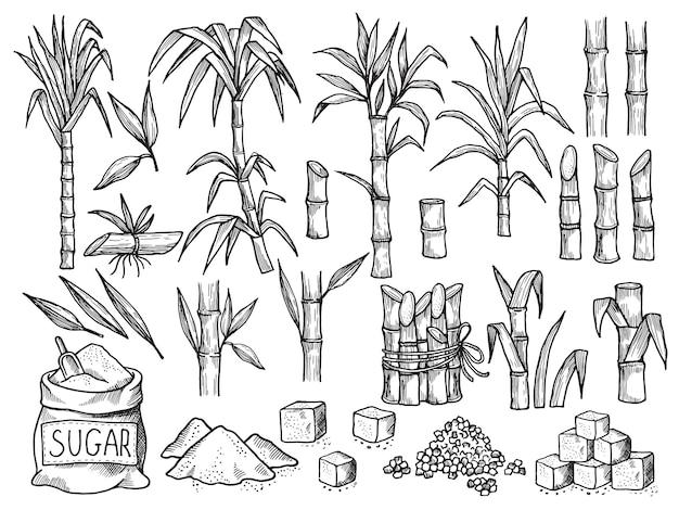 Usina de açúcar. produção agrícola de plantação de cana de mão desenhada coleção