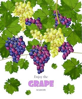 Uvas crescendo colheitas