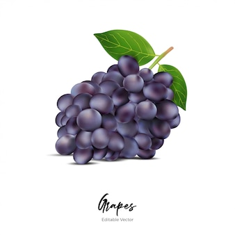 Uvas frutas realista