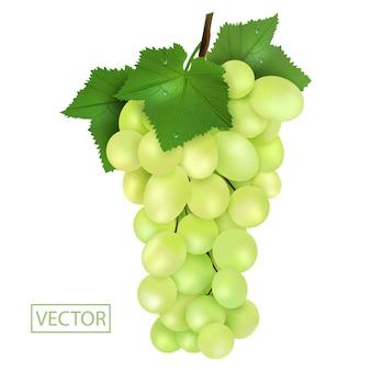 Uvas verdes realistas e folhas com gotas