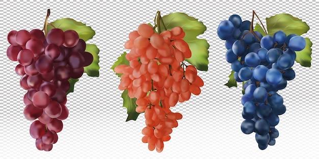 Uvas vermelhas, rosas e azuis. uvas para vinho, uvas de mesa. fruta realista. comida de conceito. ilustração vetorial