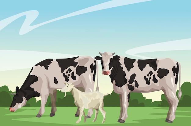 Vaca e cabra