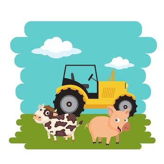 Vaca e porco em pé ao lado do trator