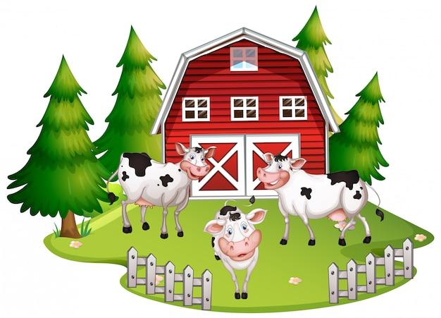 Vaca em terras agrícolas