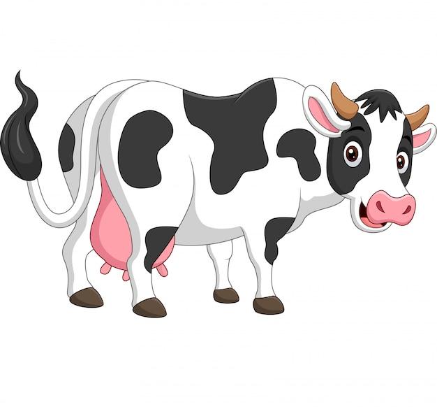 Vaca feliz dos desenhos animados, posando isolado no branco