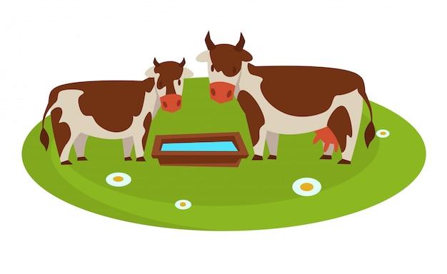 Vacas com calha de madeira cheia de água no campo