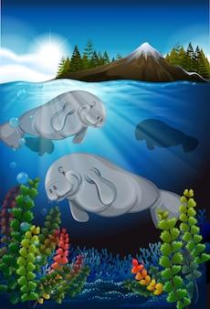 Vacas marinhas nadando no fundo do mar