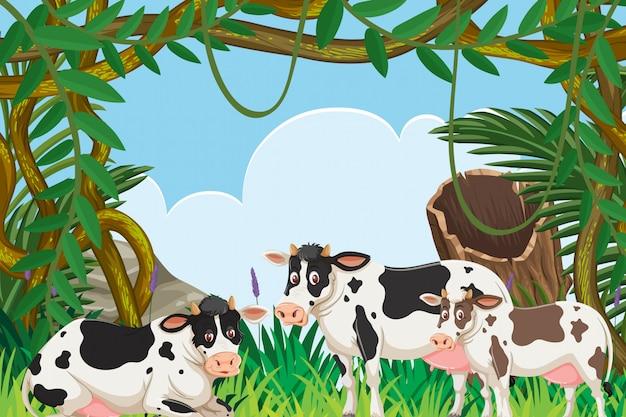 Vacas na cena da natureza